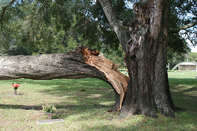 Tree Failure (1)