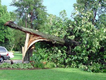 Tree Failure (2)